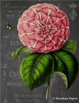 Botanical 205 - BOT205