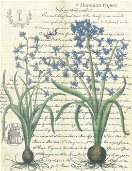 Botanical 53 - BOT53