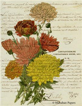 Botanical 62 - BOT62