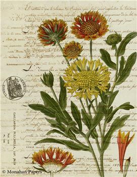 Botanical 63 - BOT63