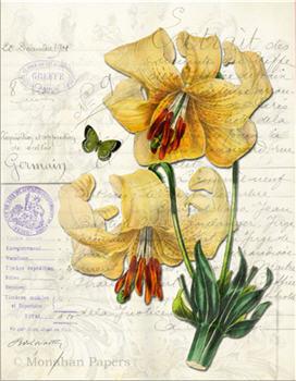 Botanical 79 - BOT79