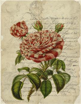 Botanical 80 - BOT80