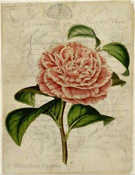 Botanical 81 - BOT81