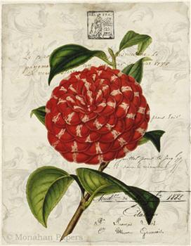 Botanical 82 - BOT82