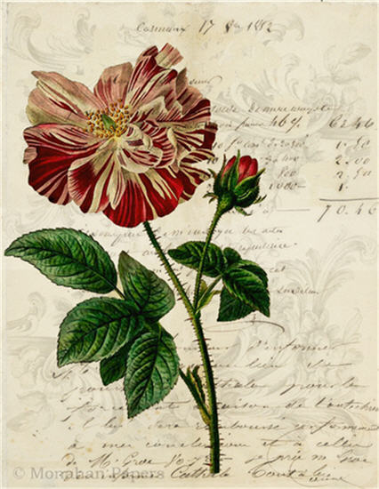Botanical 83 - BOT83