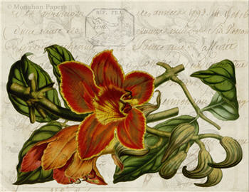 Botanical 84 - BOT84