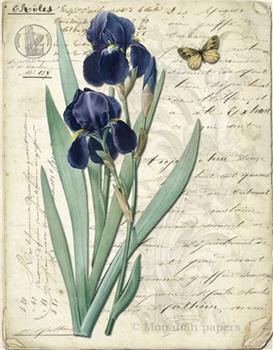 Botanical 87 - BOT87