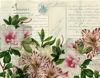 Botanical 93 - BOT93