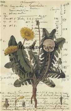 Botanical 9 - BOT9