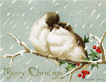 Merry Christmas Birds - C243