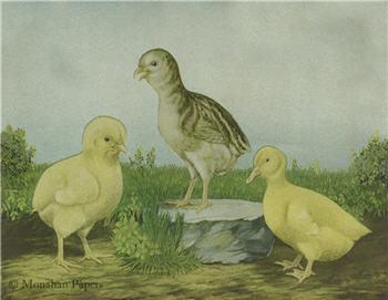 Chicks on the Farm - E4