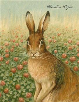 Rose Hare - E78