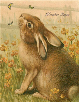 Bunny & Butterflies - E84