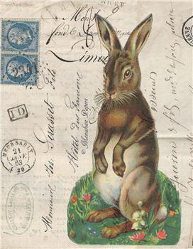 Mr. Bunny - E85