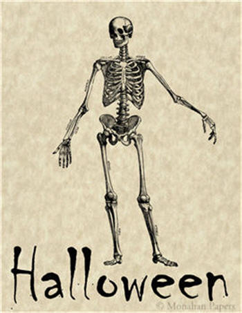 Halloween Skeleton - H41