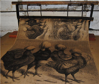 Hens & Roosters Wrapping Paper