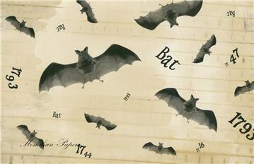 Bat - SPS257