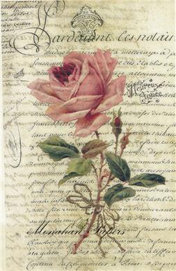 Heureuse Anne Rose - SPS358