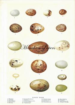 Egg Plate - SPS450