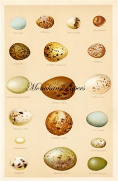 Egg Plate - SPS451