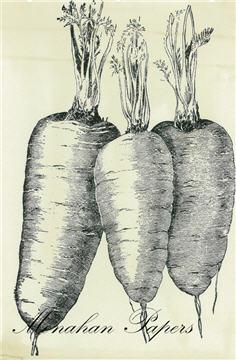 Carrots - SPS458