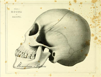 From a Mound at Racine Skull - SPS602