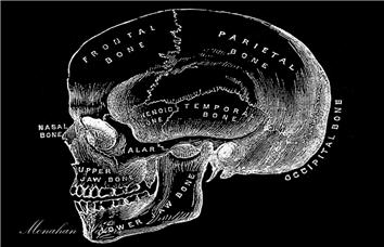 Cranium  - SPS608i