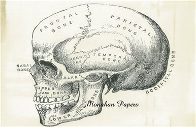 Cranium - SPS608