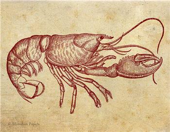 Red Lobster - SPS640