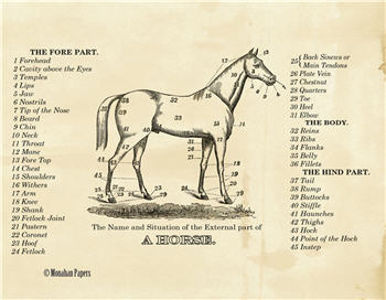A Horse - SPS94