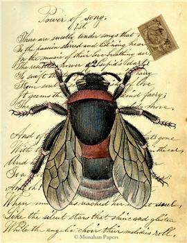 Bee - X135