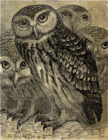 A Gathering of Owls - X173