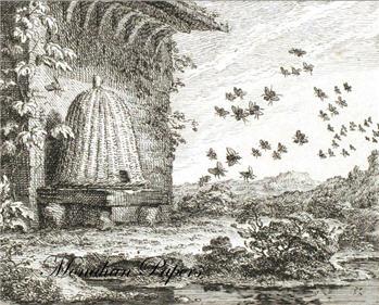 Swarm of Bees - X191